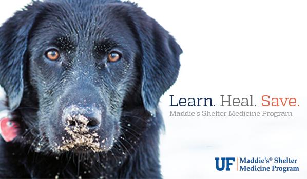 Meet the Team » Maddie's Shelter Medicine Program » College